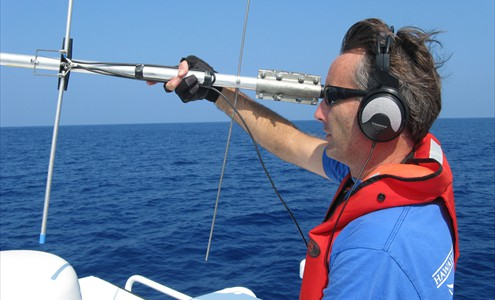 Ed Lyman uses telementry to locate a humpback whale