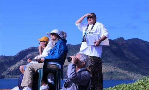 Volunteers count whales on Kaua'i