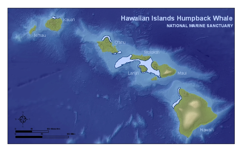 Hawaiian Islands Humpback Whale Library Maps Charts And GIS Data - Ocean depth map