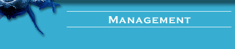 Management header bar graphic