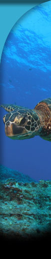 Resource Protections right bar sea turtle graphic