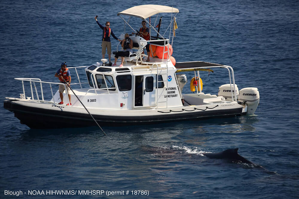 Noaa workers on aboat photograph an approaching whale